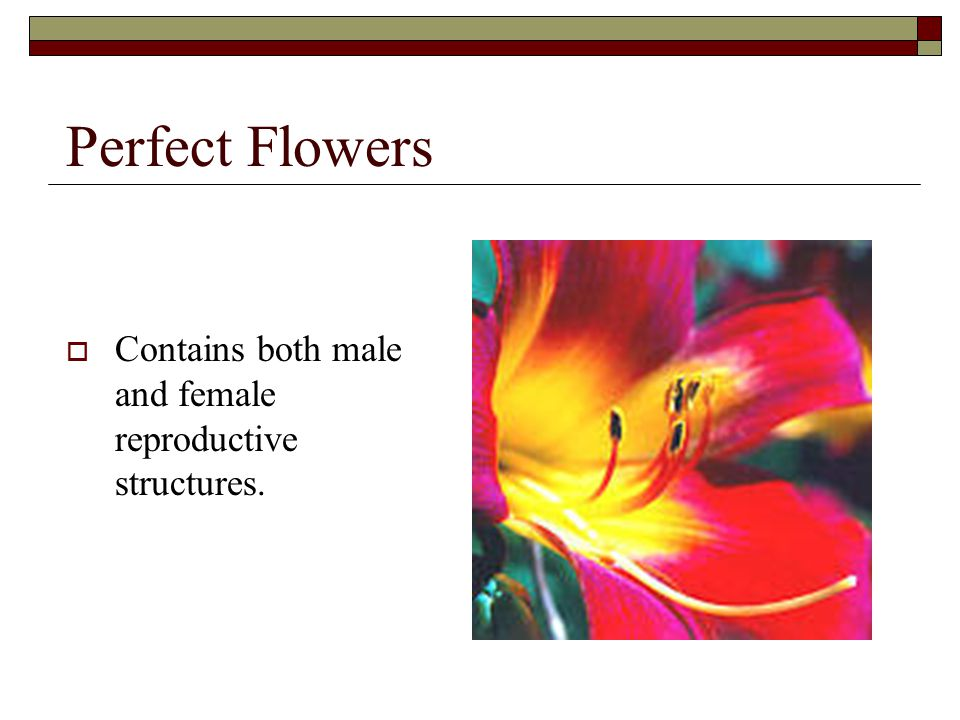 Perfect Flowers Contains both male and female reproductive structures.