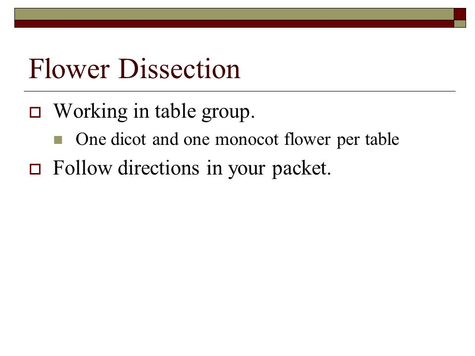 Flower Dissection Working in table group.