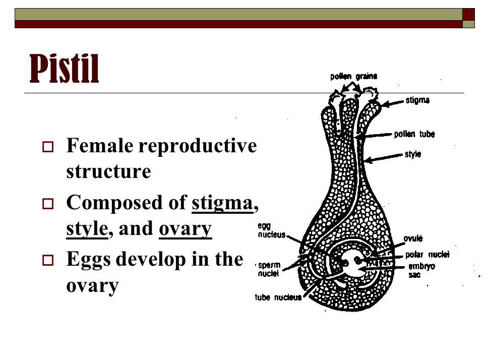 Pistil Female reproductive structure