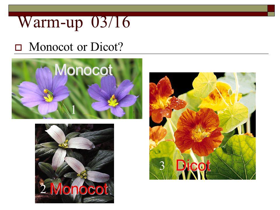 Warm-up 03/16 Monocot or Dicot Monocot 1 Dicot 3 Monocot 2