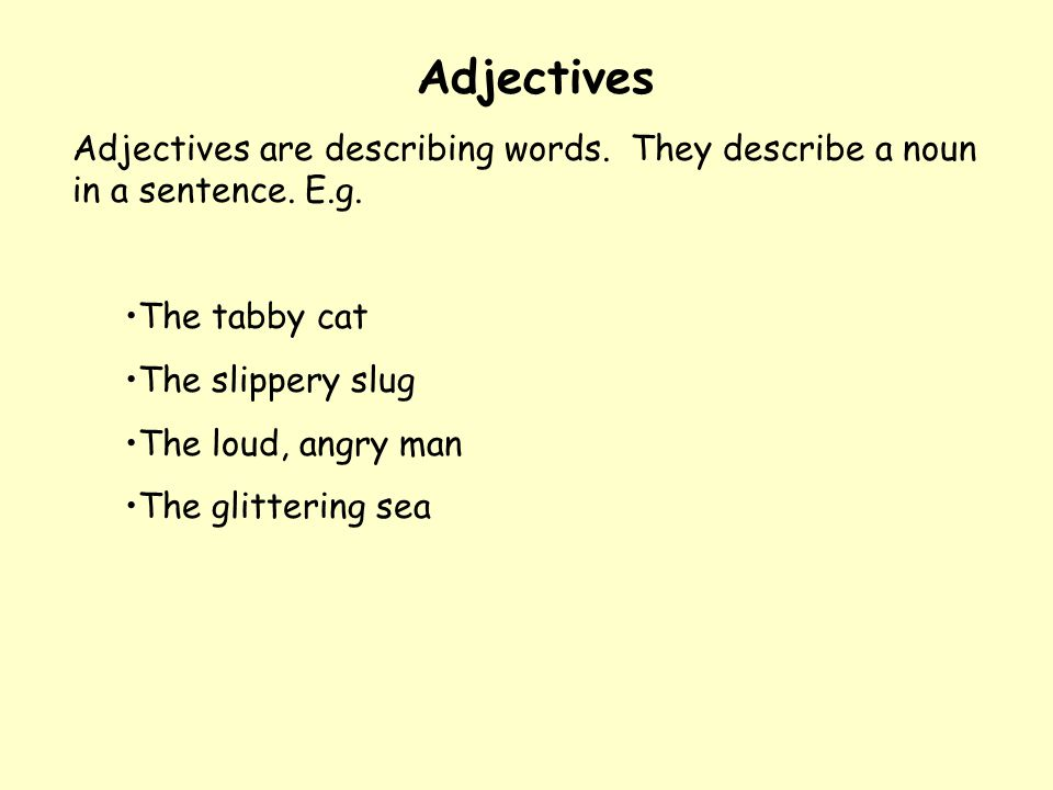 175+ adjectives words to describe a Cat