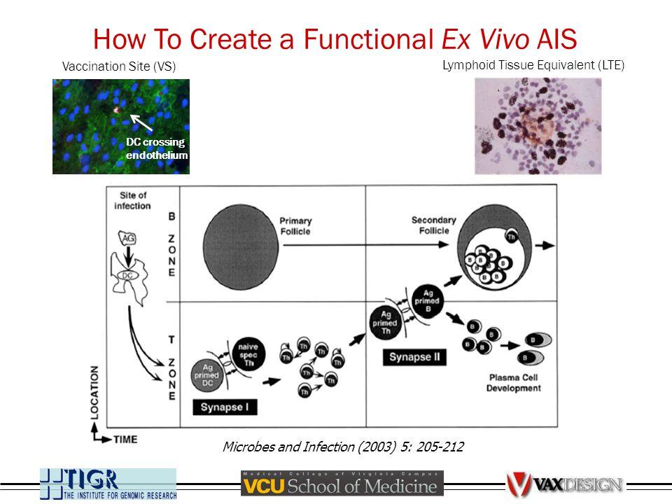 How To Create a Functional Ex Vivo AIS