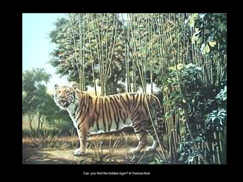 Can you find the hidden tiger © Thomas Rust