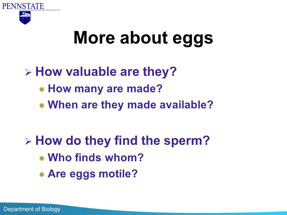 More about eggs How valuable are they How do they find the sperm