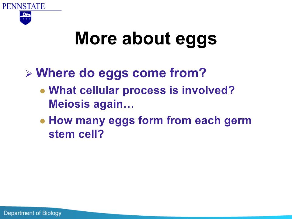 More about eggs Where do eggs come from