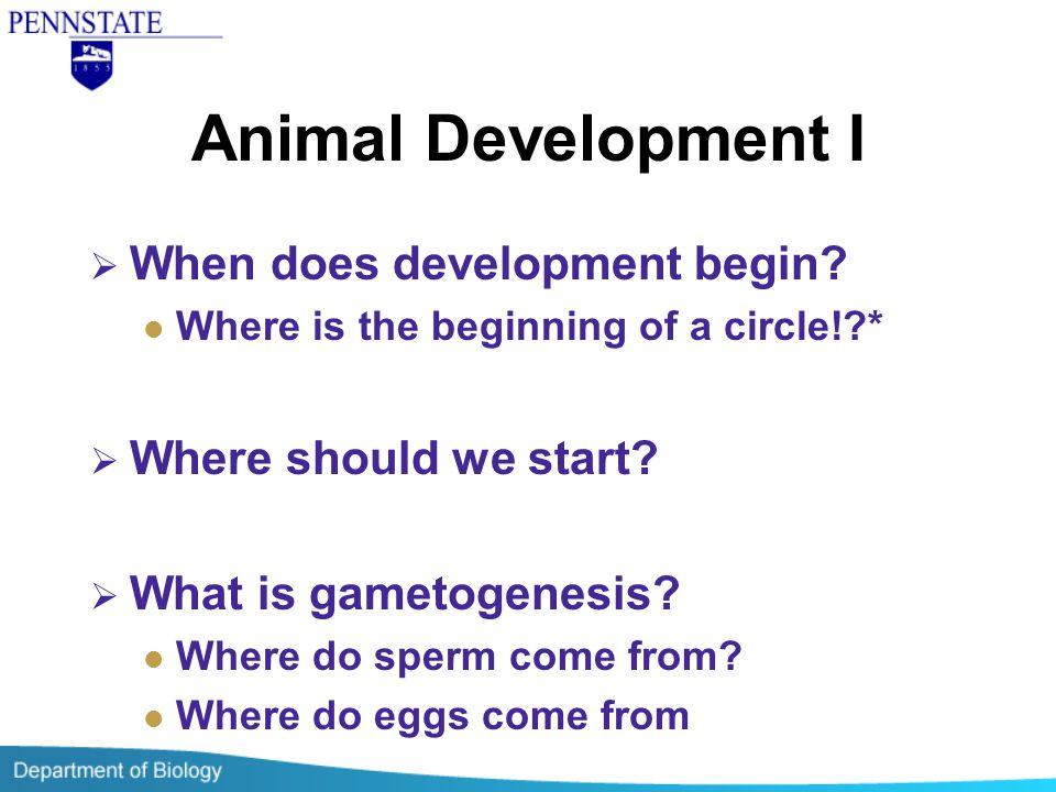 Animal Development I When does development begin