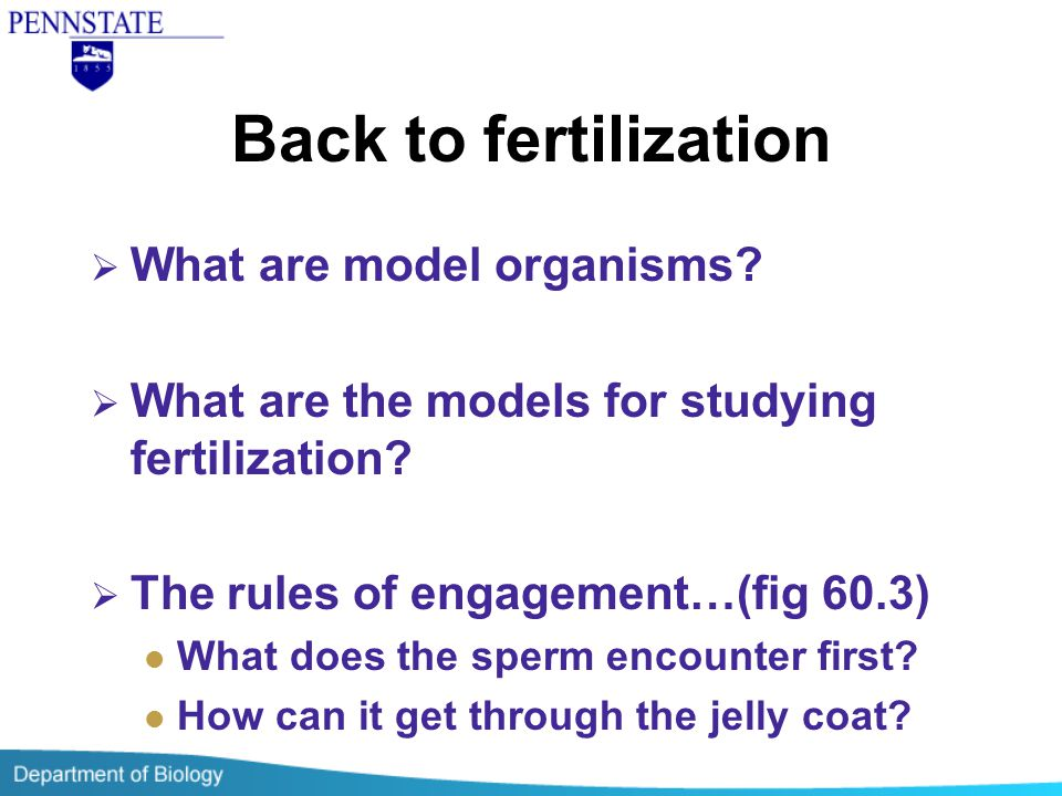 Back to fertilization What are model organisms