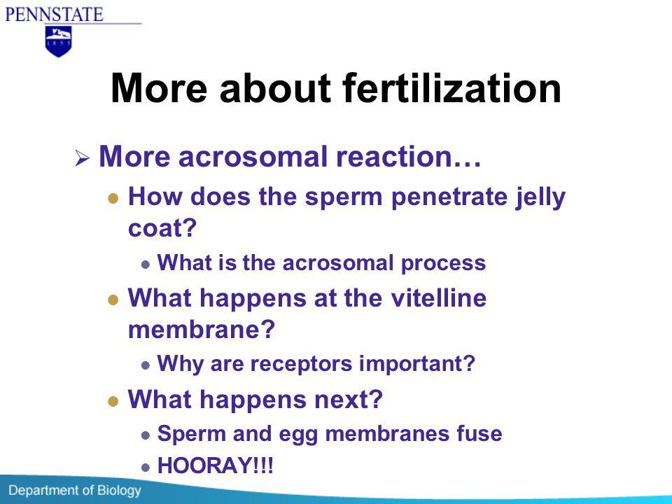 More about fertilization