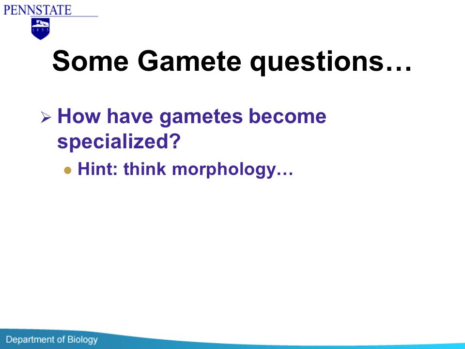 Some Gamete questions…