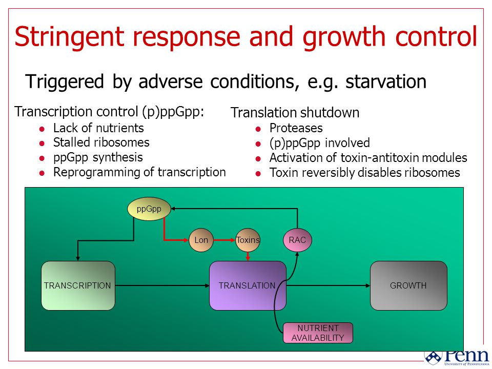 Stringent response and growth control