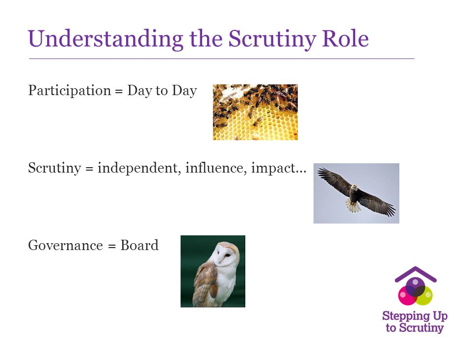 Understanding the Scrutiny Role