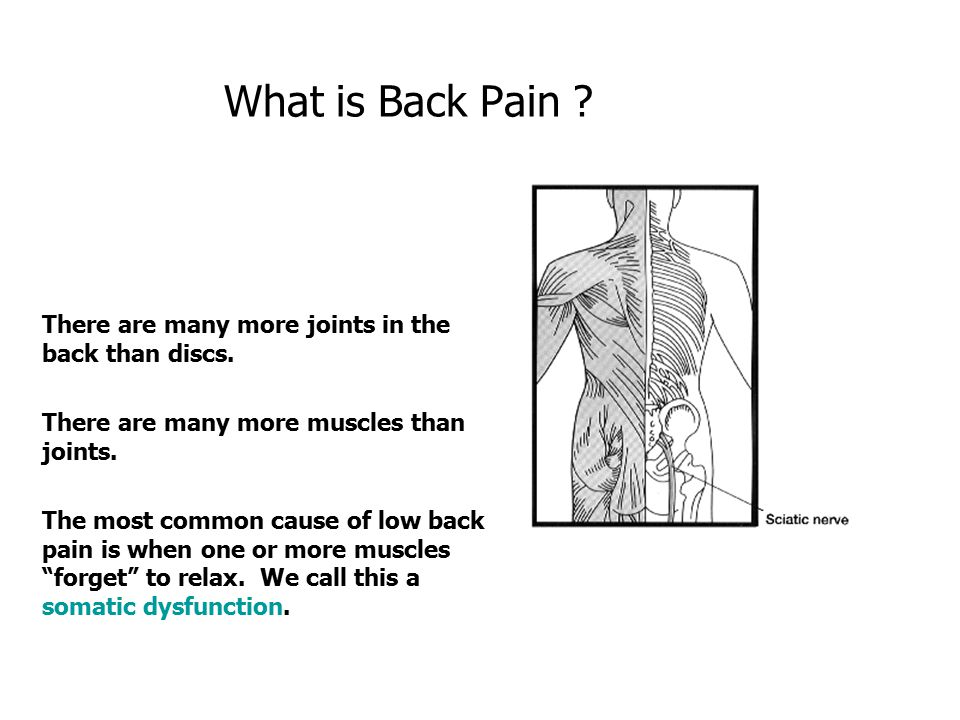 What is Back Pain There are many more joints in the back than discs.