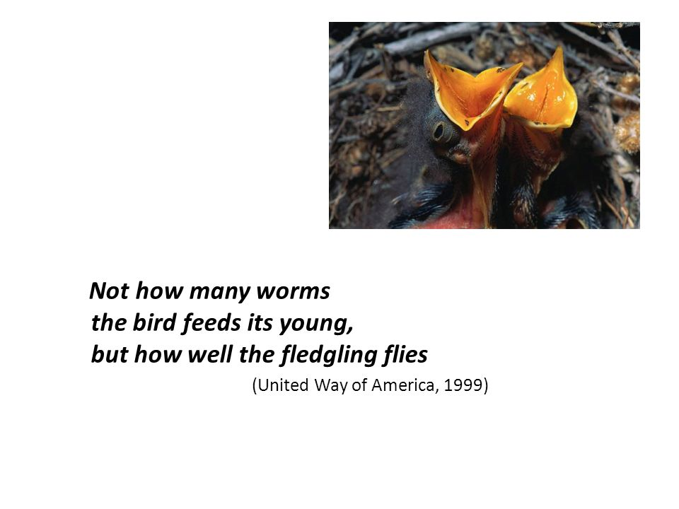 Not how many worms the bird feeds its young, but how well the fledgling flies