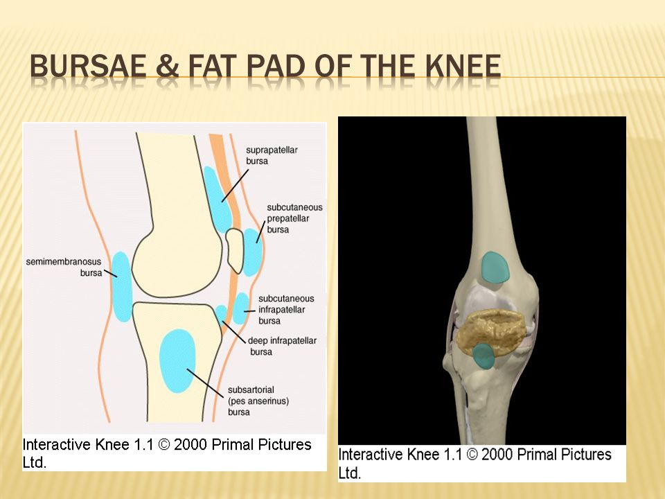 Bursae & Fat Pad of the Knee