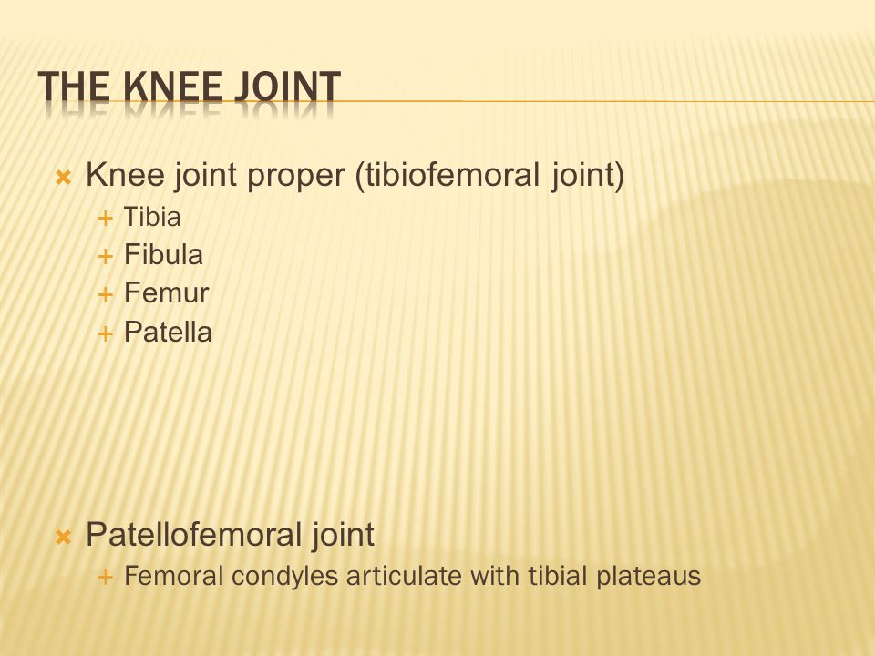 The Knee Joint Knee joint proper (tibiofemoral joint)