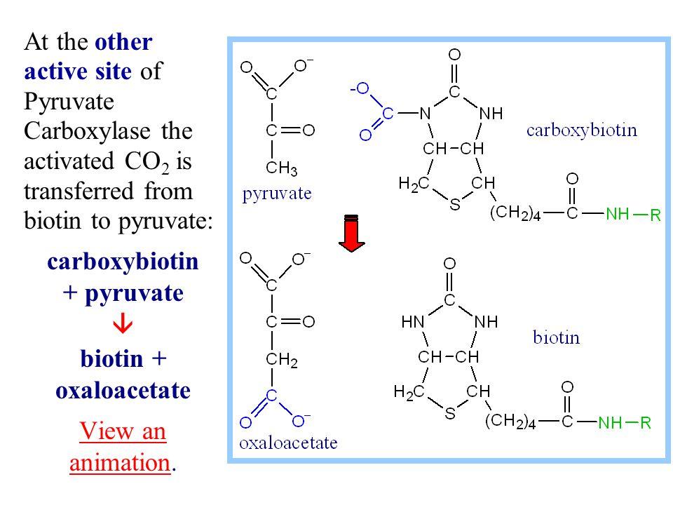 carboxybiotin + pyruvate