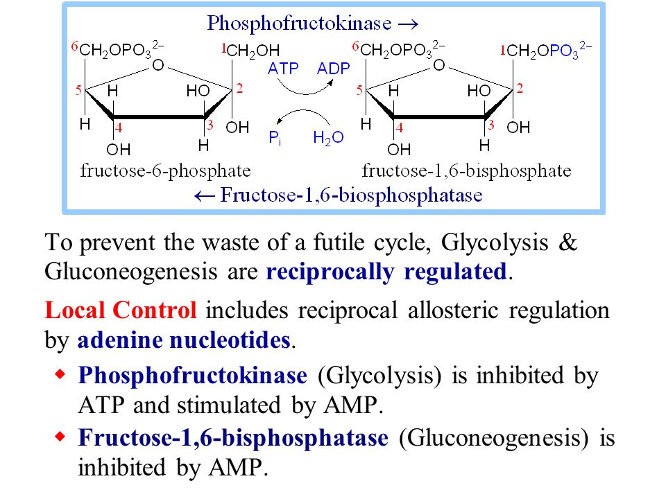 To prevent the waste of a futile cycle, Glycolysis & Gluconeogenesis are reciprocally regulated.