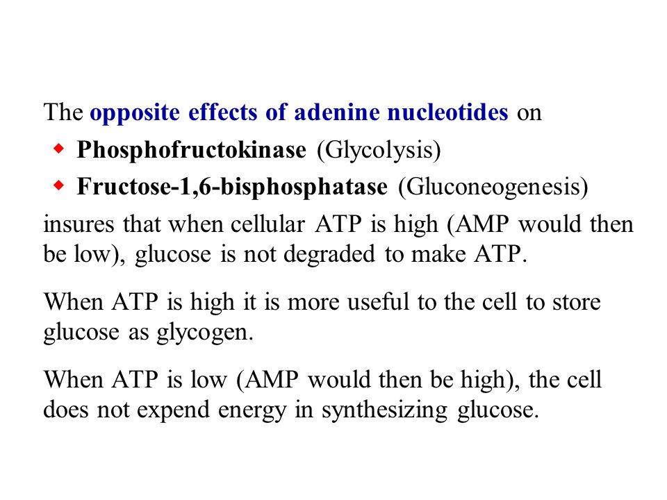 The opposite effects of adenine nucleotides on