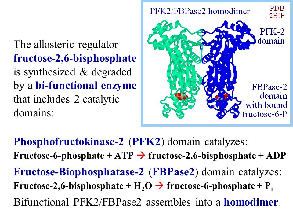 Phosphofructokinase-2 (PFK2) domain catalyzes: