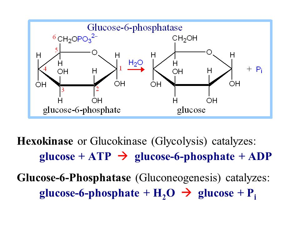 Hexokinase or Glucokinase (Glycolysis) catalyzes: