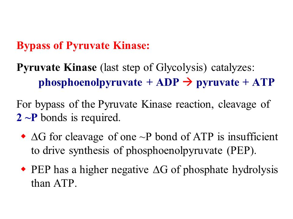 Bypass of Pyruvate Kinase: