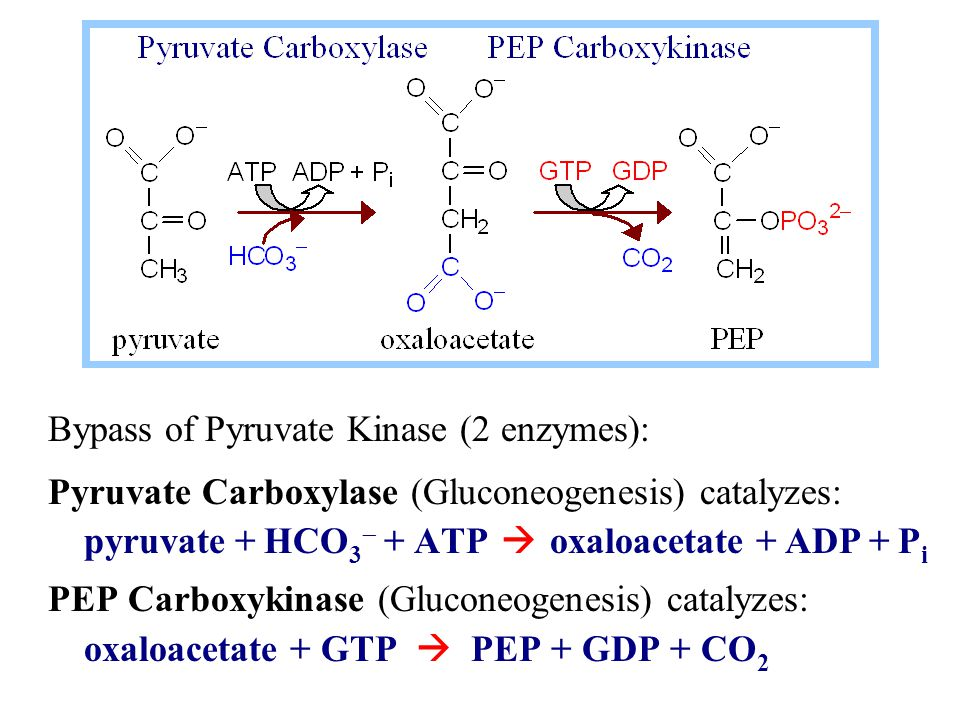 Bypass of Pyruvate Kinase (2 enzymes):