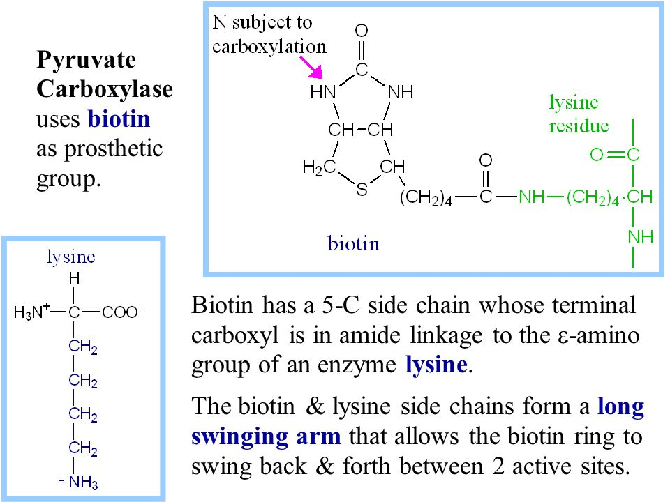 Pyruvate Carboxylase uses biotin as prosthetic group.