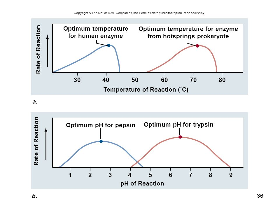 Optimum temperature for enzyme from hotsprings prokaryote