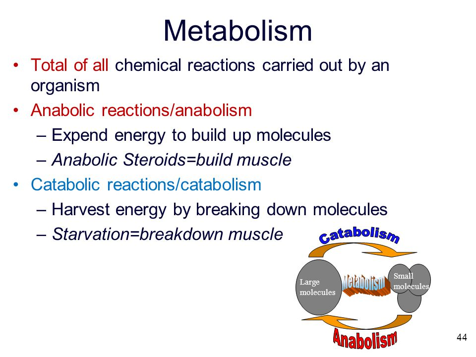 Metabolism Catabolism Metabolism Anabolism