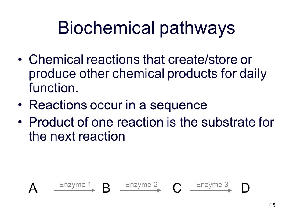 Biochemical pathways Chemical reactions that create/store or produce other chemical products for daily function.