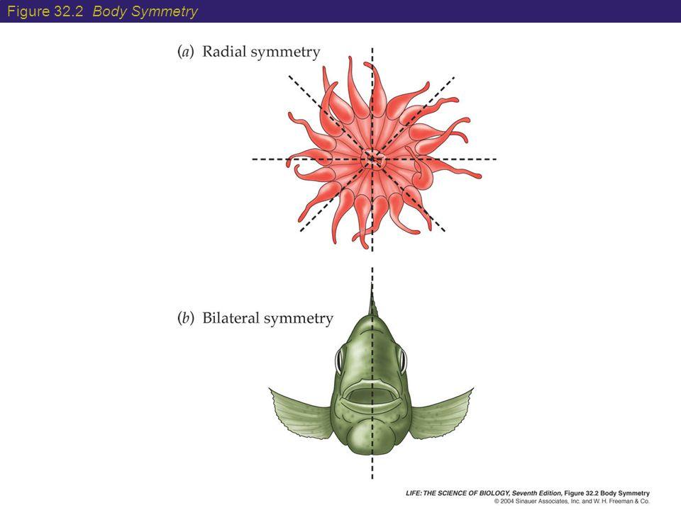 Figure 32.2 Body Symmetry