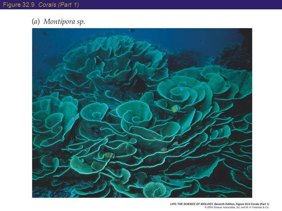 Figure 32.9 Corals (Part 1)