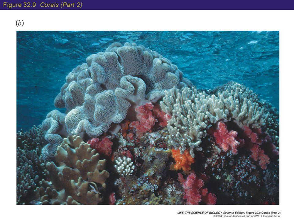 Figure 32.9 Corals (Part 2)