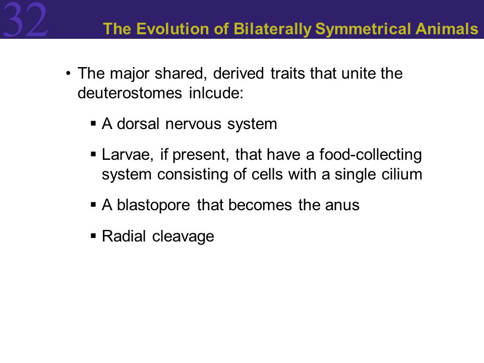 The Evolution of Bilaterally Symmetrical Animals