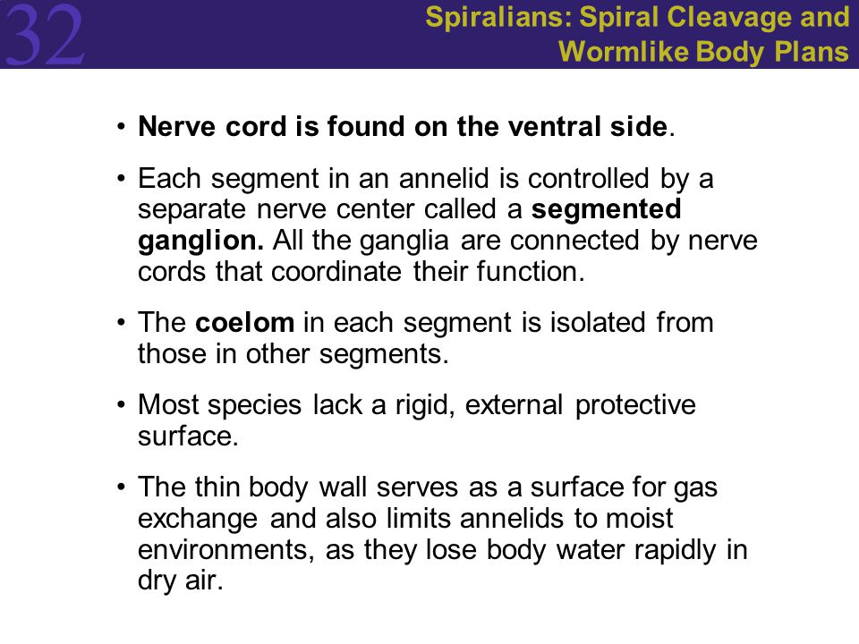 Spiralians: Spiral Cleavage and Wormlike Body Plans
