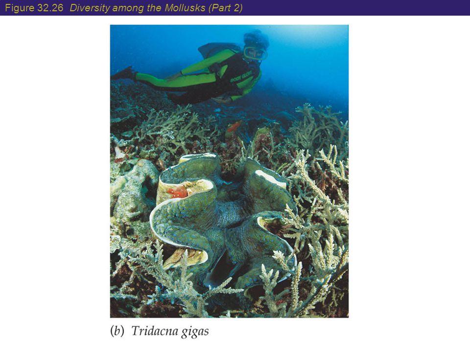 Figure 32.26 Diversity among the Mollusks (Part 2)