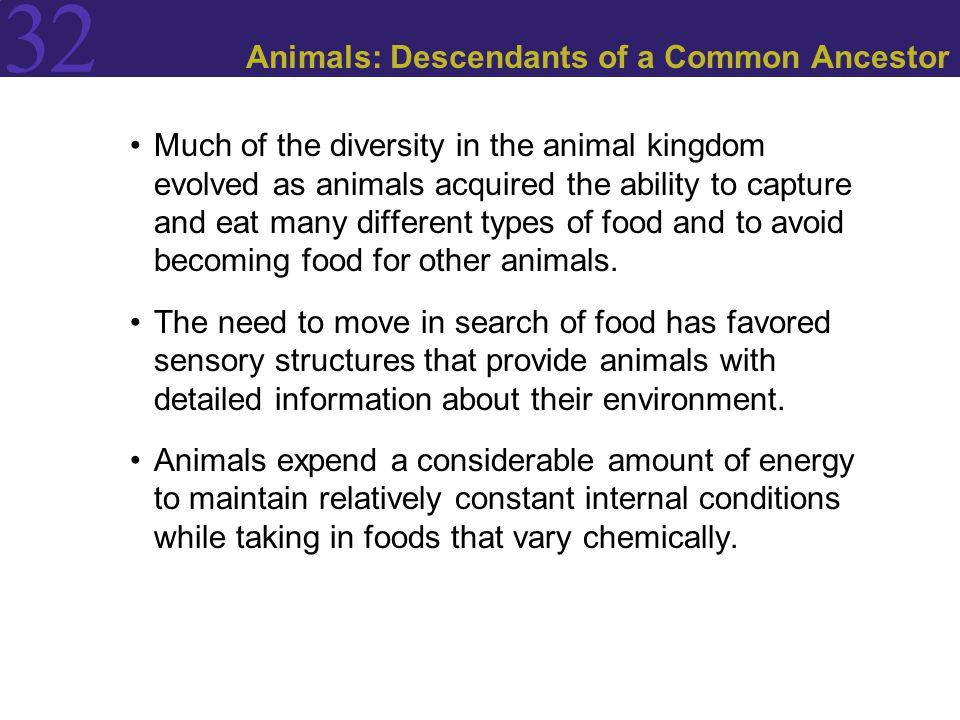 Animals: Descendants of a Common Ancestor
