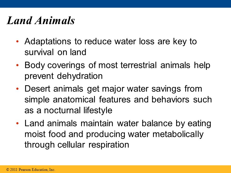 Land Animals Adaptations to reduce water loss are key to survival on land. Body coverings of most terrestrial animals help prevent dehydration.