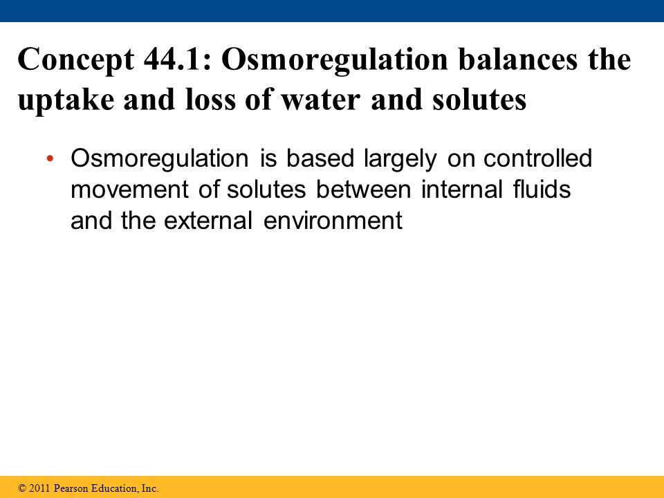 Concept 44.1: Osmoregulation balances the uptake and loss of water and solutes