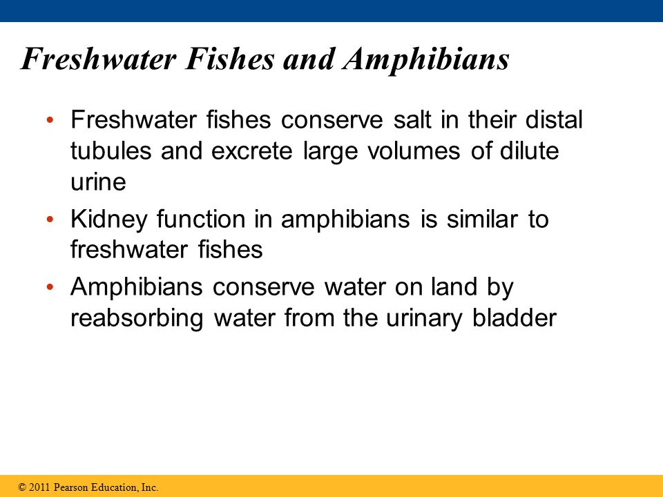 Freshwater Fishes and Amphibians
