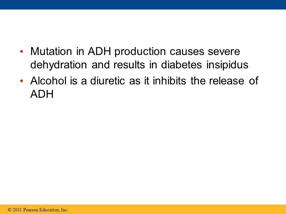 Alcohol is a diuretic as it inhibits the release of ADH