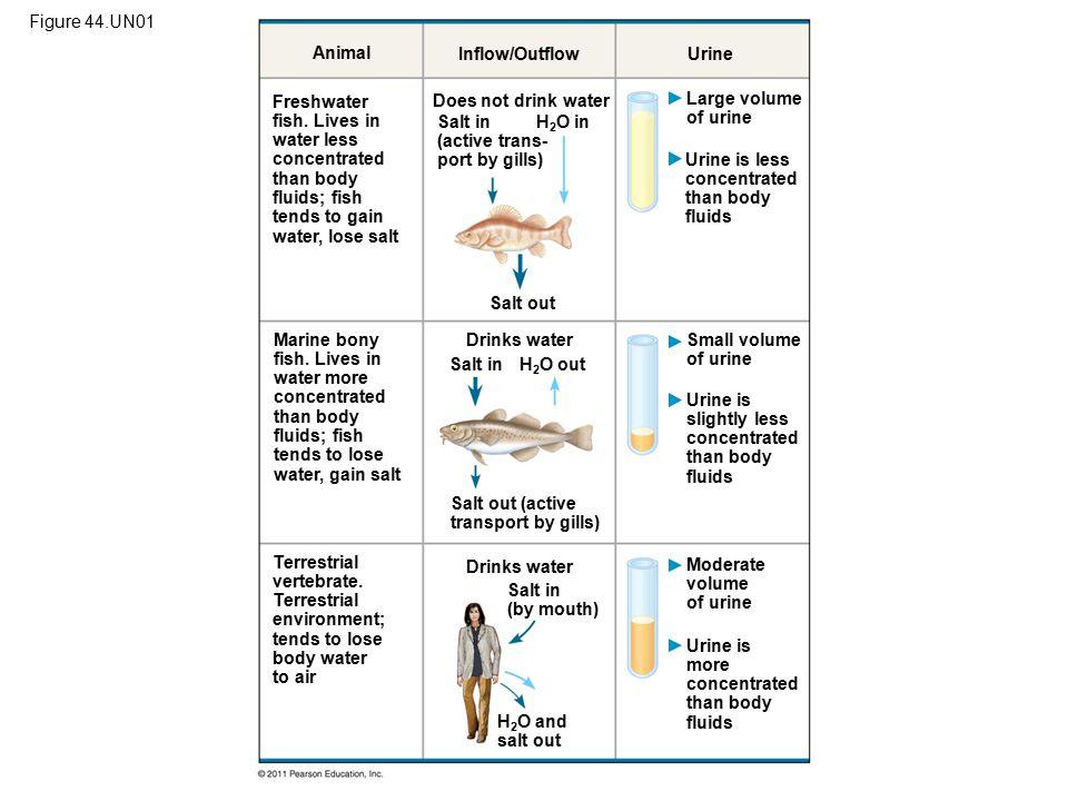 Figure 44.UN01 Animal. Inflow/Outflow. Urine.