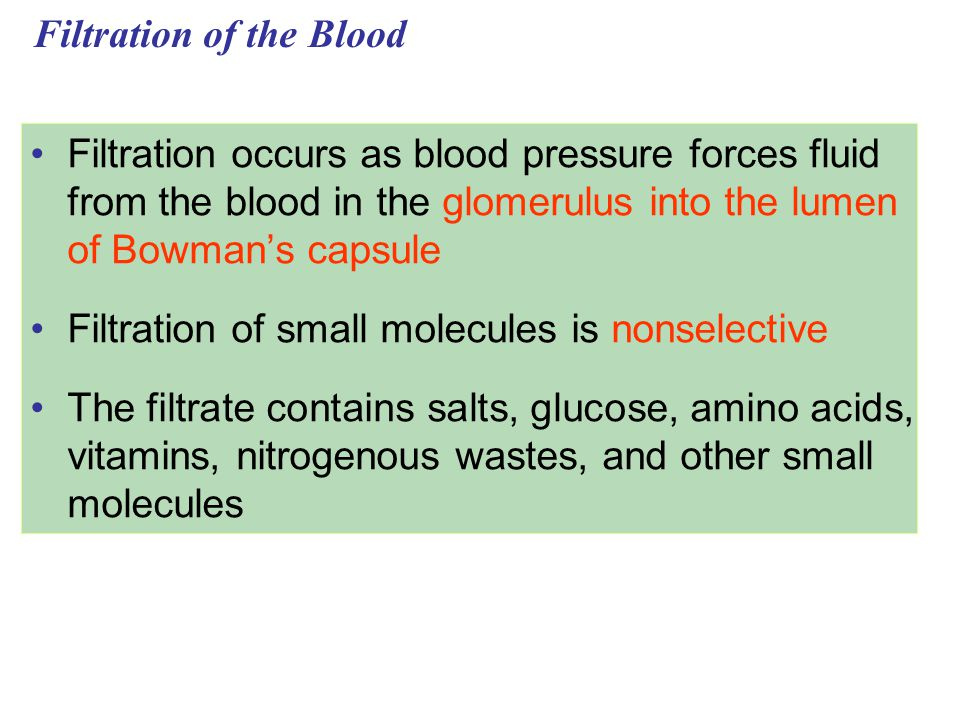 Filtration of the Blood