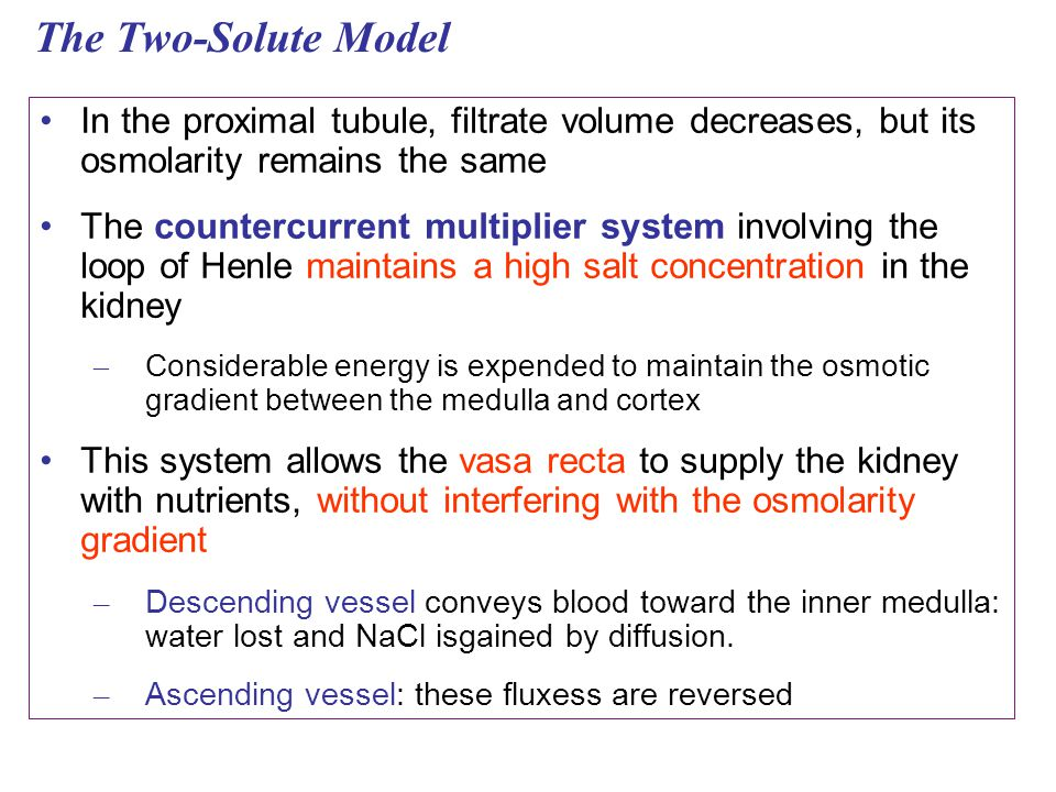 The Two-Solute Model In the proximal tubule, filtrate volume decreases, but its osmolarity remains the same.
