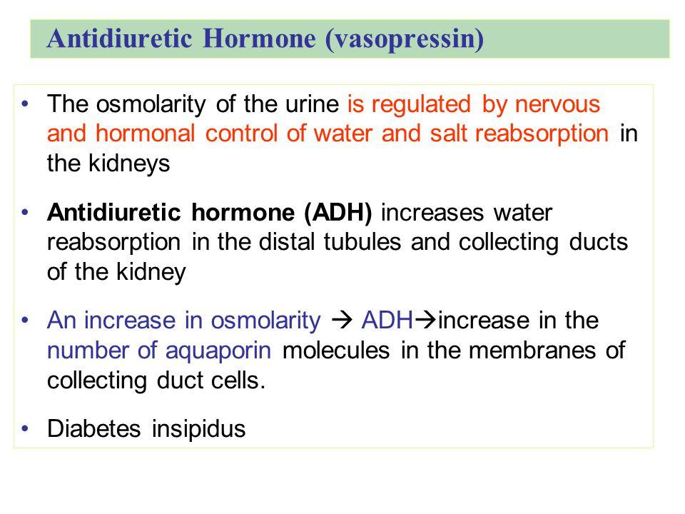 Antidiuretic Hormone (vasopressin)
