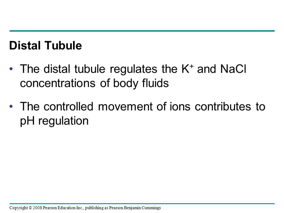 Distal Tubule The distal tubule regulates the K+ and NaCl concentrations of body fluids.