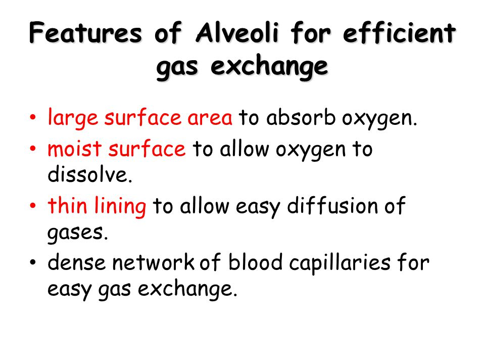 Features of Alveoli for efficient gas exchange