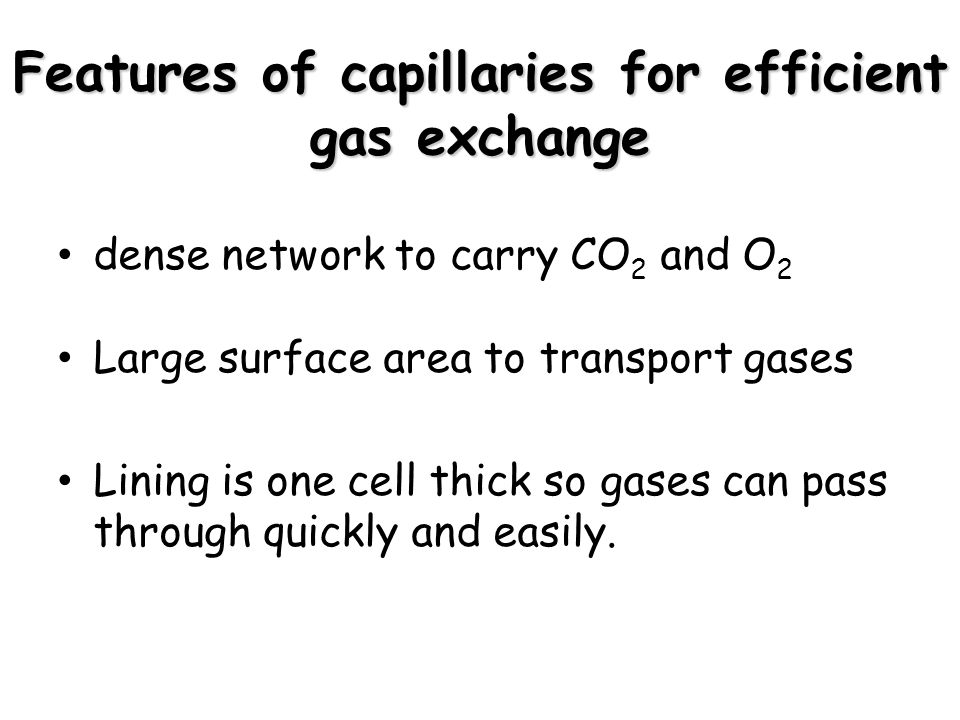 Features of capillaries for efficient gas exchange