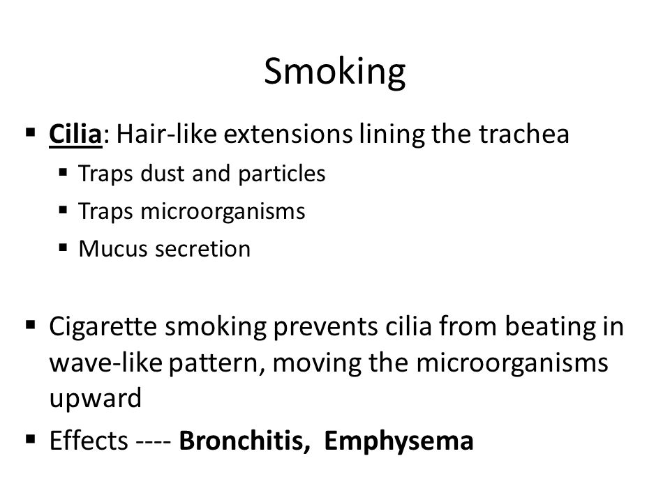Smoking Cilia: Hair-like extensions lining the trachea