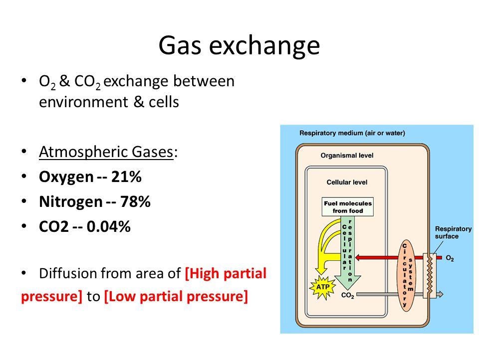 Gas exchange O2 & CO2 exchange between environment & cells